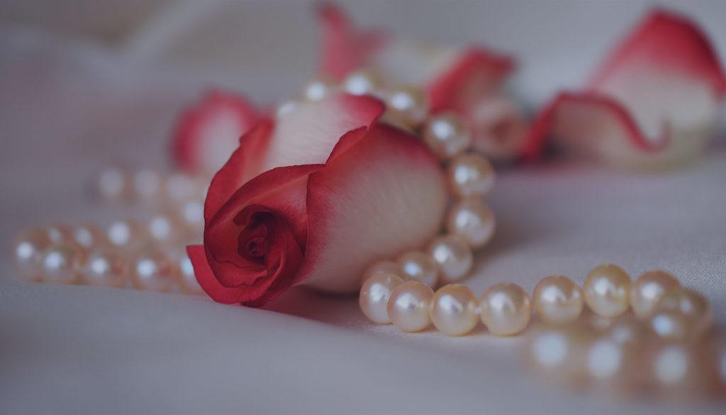 rose-3030462
