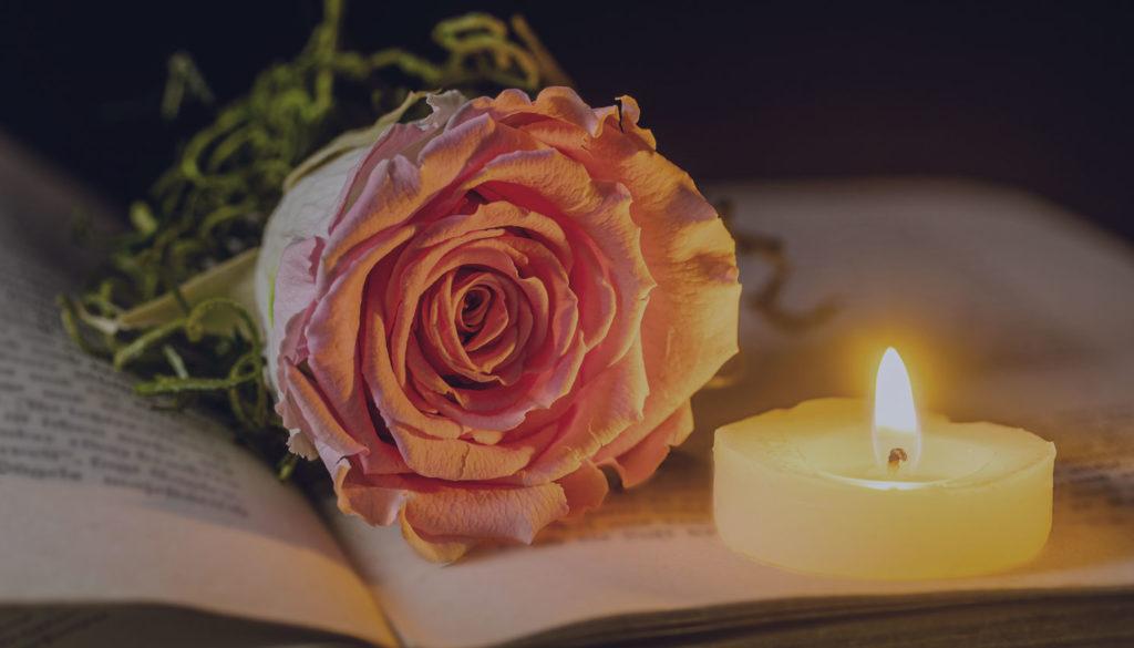 rose-4871606